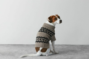 elle-00-American-Beagle-outfitters-H