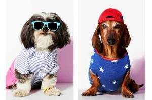 elle-american-beagle-dachsund-h-lgn