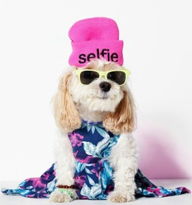 elle-american-beagle-v